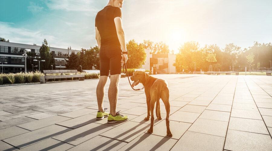 Chicago rentals with dog run